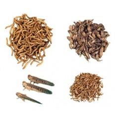 Insektpakke med smagsprøver