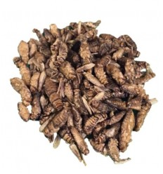 House crickets Freeze dryed 1000g