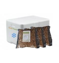 3 Liter Soldaterflue i frostpakke